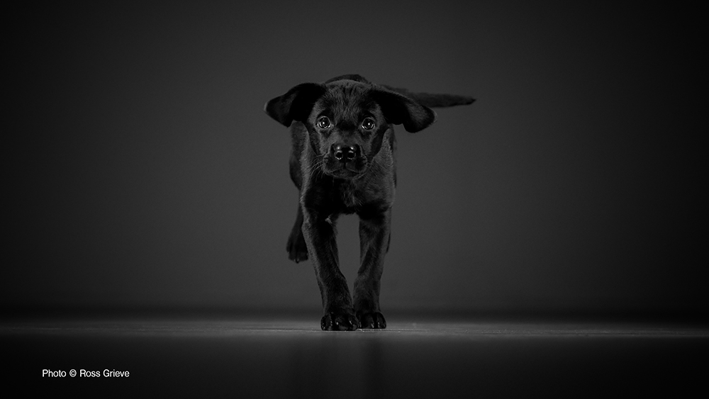 Ebony - Winning Photo of Pet Photographer of the Year